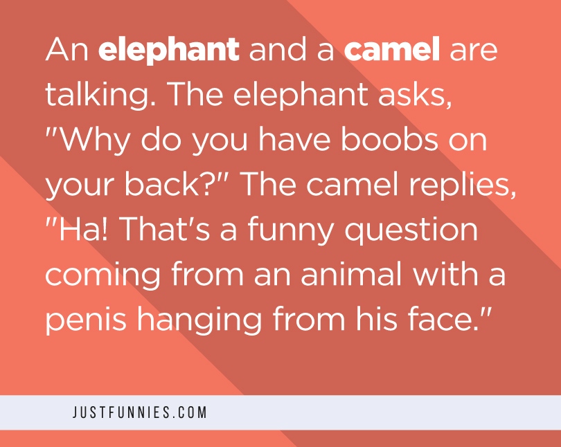 An elephant and a camel are talking. The elephant asks, Why do you have boobs on your back The camel replies, Ha! That's a funny question coming from an animal with a penis hanging from his face.